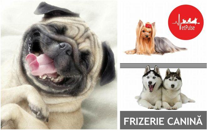 Imagine cupon oferta -  Special pentru catelul tau de companie!   Cosmetica completa canina : Tuns + Spalat + Vidat Glande perianale + Toaleta urechilor + Taiat Unghii + Masaj + Retusuri + Tratament pernute, incepand de la 69 lei in loc de 120 lei, doar la Cabinet Vet Pulse!
